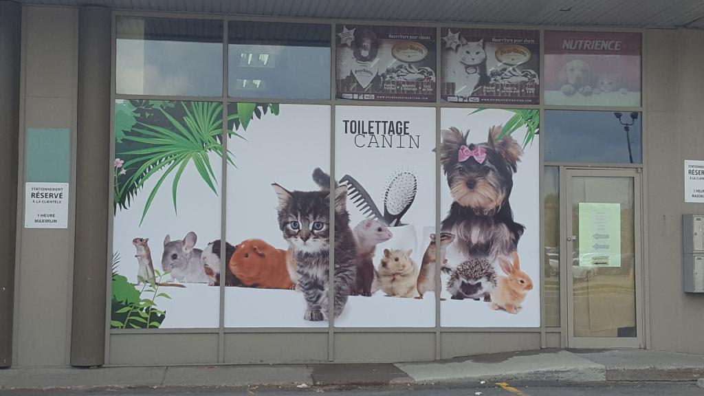 Pellicule décorative / devanture magasin